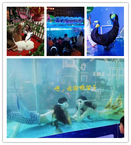 甘肃玉门市海狮表演出租租赁鳄鱼