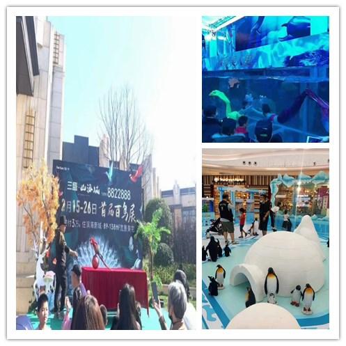 辽宁海城市萌宠动物羊驼展出租租赁大马戏