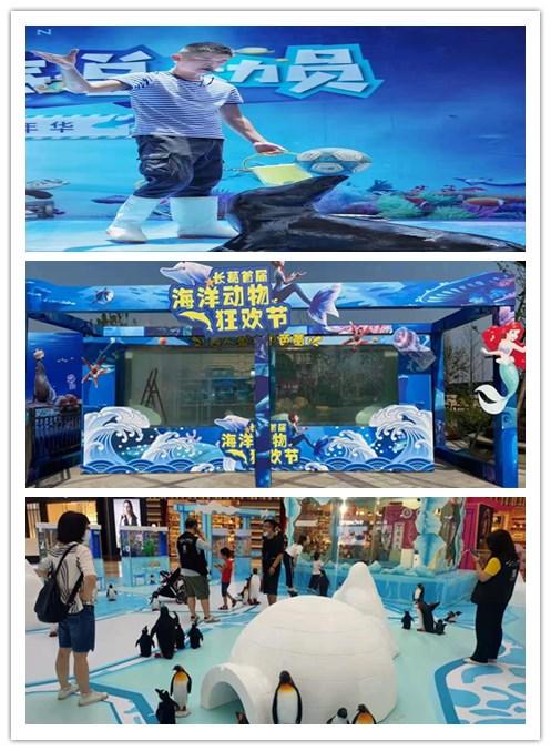 望都县鳄鱼表演出租-动物出租公司电话