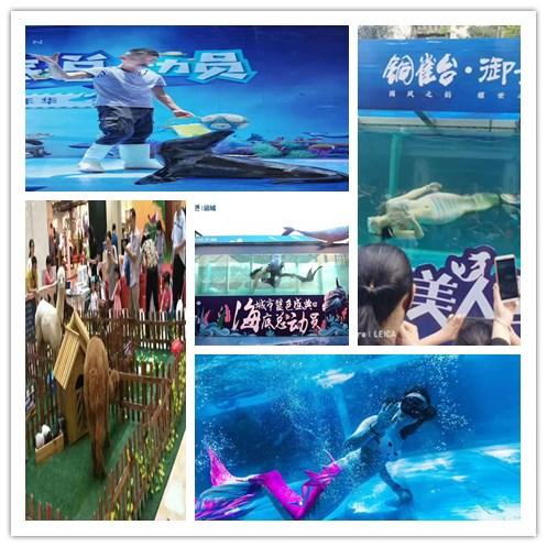 河南鹤壁市海狮表演出租租赁小动物
