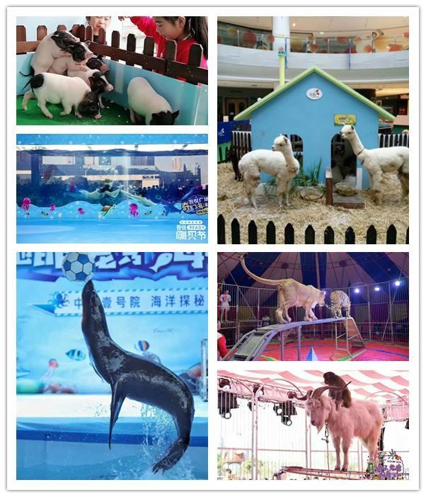 太仓市动物表演出租-动物表演出租哪里有