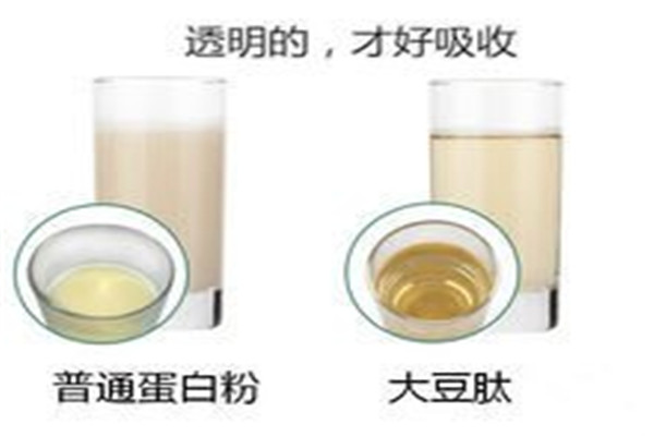 云南省曲靖市食品级鱼胶原蛋白肽支持小包装订购