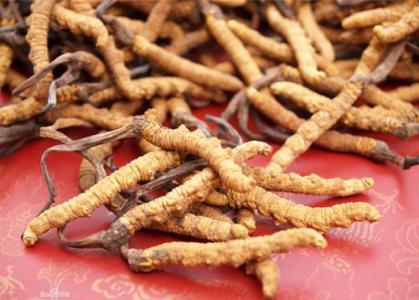 岳陽-臨湘回收冬蟲夏草價值 冬蟲夏草回收商家在哪-歡迎來電