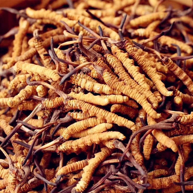 衡阳-珠晖区上门回收冬虫夏草价格 回收虫草商家-大量求购