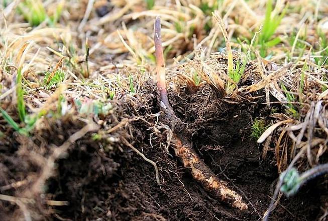 五华礼盒虫草回收多少钱一克-回收虫草