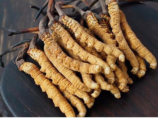 梅州梅江回收冬虫夏草价格-虫草回收今天价格