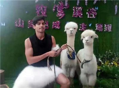 潮南区小动物表演租赁国庆节档期预订