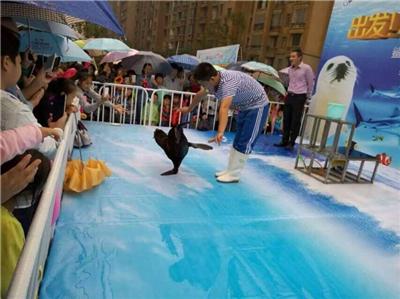 繁峙县海陆空动物展览出租羊驼矮马展览租赁