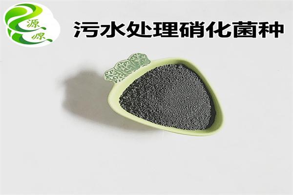 哈尔滨香坊缺氧池反硝化菌种效果如何