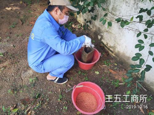 沧州考白蚁防治工证培训全国通用详情必看