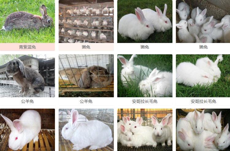 呼和浩特武川合作加盟肉兔年收益可观