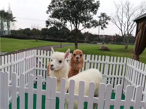 臨汾萌寵羊駝展覽出租馬戲表演租賃