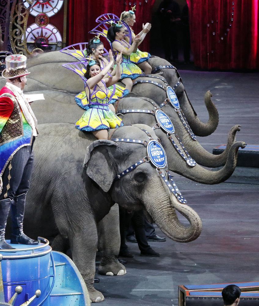 江西上饶商场动物展览|哪里出租海洋展——多少钱