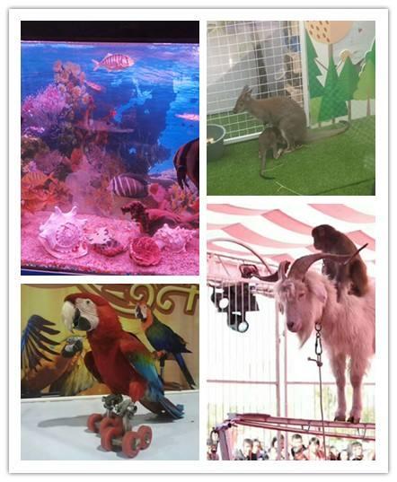 张家口市海洋生物鱼缸展览出租长期供应