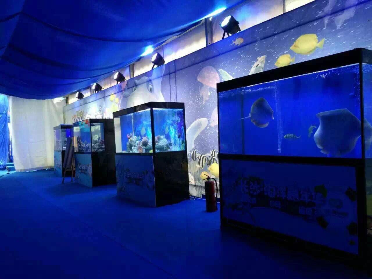 施甸县海洋生物节多少钱
