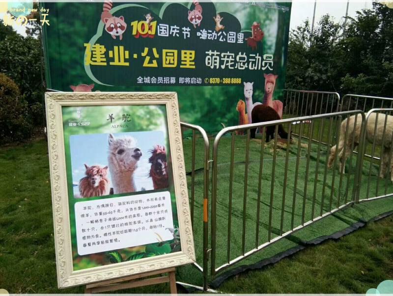 腾冲县羊驼租赁-两栖动物租赁联系电话