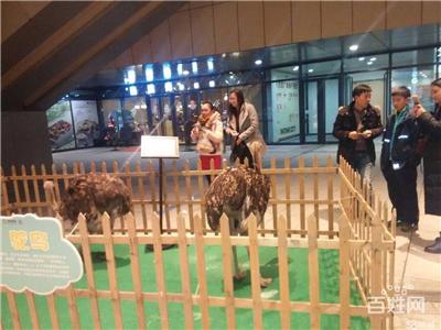 兴义市海洋生物展览出租国庆节档期预订